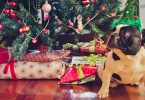20 Ways to keep Your Pets Away from Destroying Your Christmas Tree