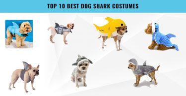 Top 10 Best Dog Shark Costumes